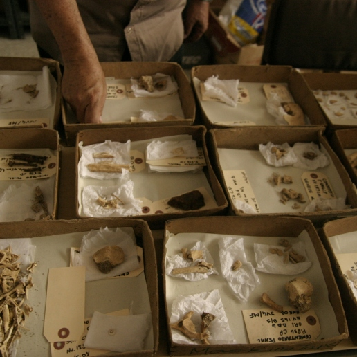 Hundreds of human and animal bones were found at the site which had to be catalogued and studied.