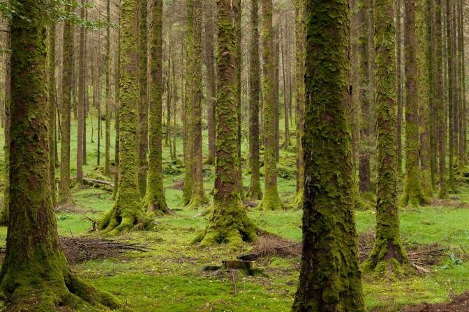 one of Ireland's expanding forests